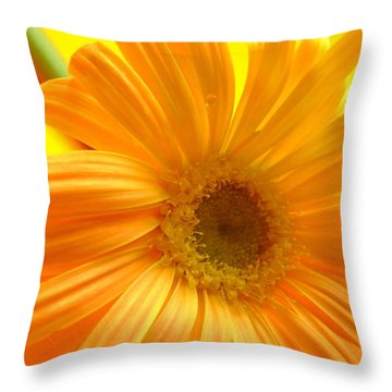 7321-007 Throw Pillow by Kimberlie Gerner