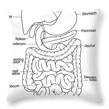 Illustration Of Abdomen Throw Pillow