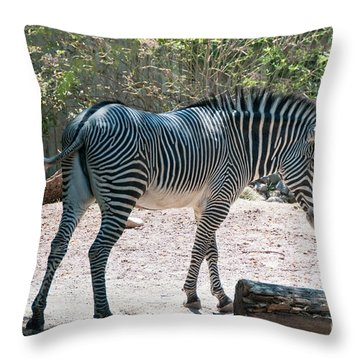 Lincoln Park Zoo In Chicago Throw Pillow by Carol Ailles