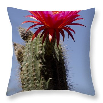 Pink Cactus Flower Throw Pillow by Jim And Emily Bush