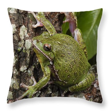 A Barking Treefrog Sits On The Crotch Throw Pillow by George Grall