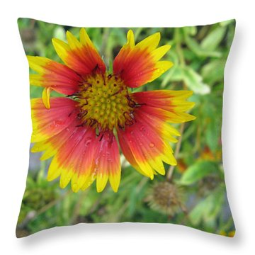 Throw Pillow featuring the photograph A Beautiful Blanket Flower by Ashish Agarwal