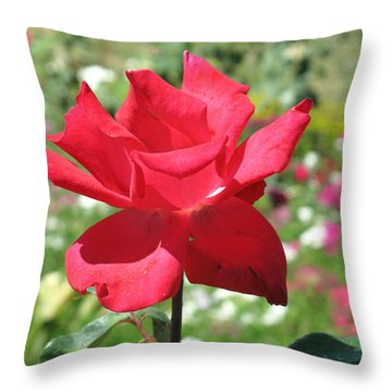 Throw Pillow featuring the photograph A Beautiful Red Flower Growing At Home by Ashish Agarwal