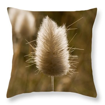 A Beautiful Seed Pod With Beautiful Sun Reflection Throw Pillow
