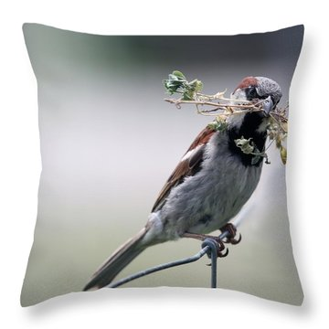 Throw Pillow featuring the photograph A Bird And A Twig by Elizabeth Winter