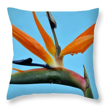 A Bird By The Pool Throw Pillow