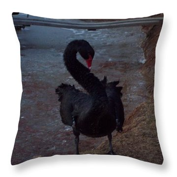 A Black Swan Completes Ice Bath Throw Pillow