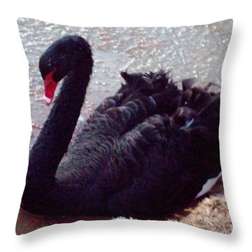 A Black Swan Throw Pillow by Robin Coaker