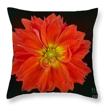 A Burst Of Orange Throw Pillow