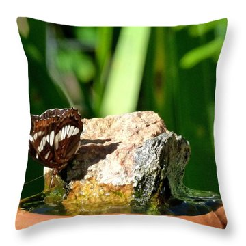A Butterfly Enjoys A Drink Throw Pillow by Will Borden