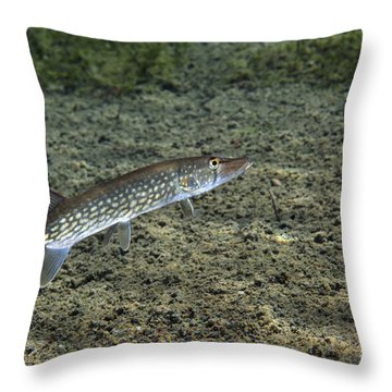 A Chain Pickerel Wimming The River Throw Pillow by Terry Moore