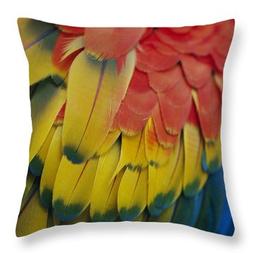 A Close-up View Of A Parrots Rainbow Throw Pillow