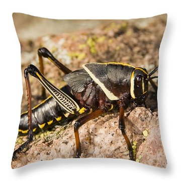 A Colorful Lubber Grasshopper Throw Pillow by Jack Goldfarb