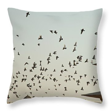 Throw Pillow featuring the photograph A Flock Of Pigeons Crowding One Of The Structures On Top Of The Red Fort by Ashish Agarwal