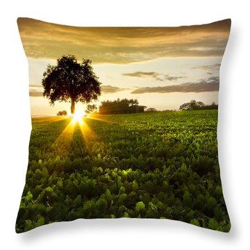 A Golden Evening  Throw Pillow by Debra and Dave Vanderlaan
