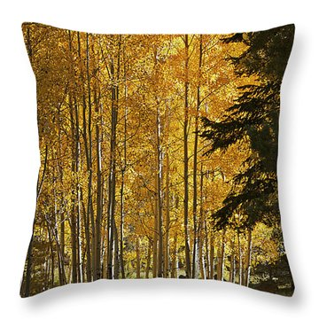 A Golden Trail Throw Pillow by Phyllis Denton