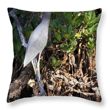 Throw Pillow featuring the photograph A Heron Type Bird In The Mangroves by Judy Via-Wolff