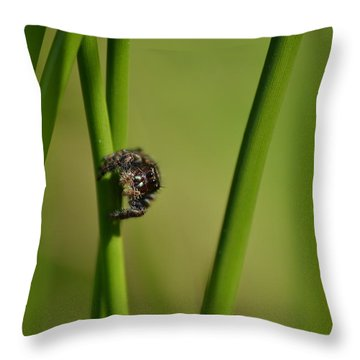 Throw Pillow featuring the photograph A Jumper In The Grass by JD Grimes