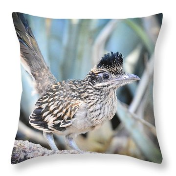 A Juvenile Greater Roadrunner  Throw Pillow
