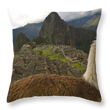 A Llama And Reconstructed Stone Throw Pillow by Michael Melford