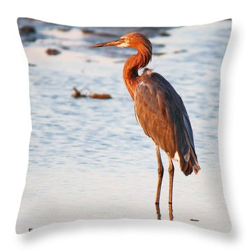 A Lone Reddish Egret Throw Pillow by Roena King
