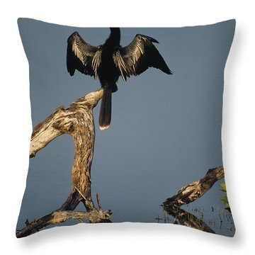 A Male Anhinga Perches On A Tree Stump Throw Pillow
