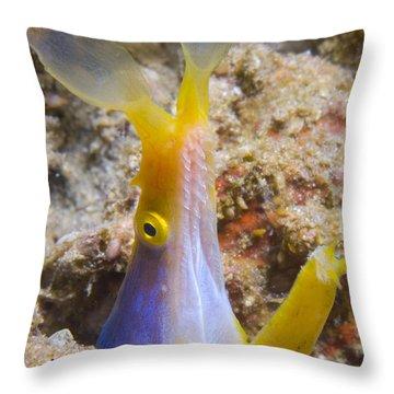 A Male Ribbon Eel Peering Throw Pillow by Steve Jones