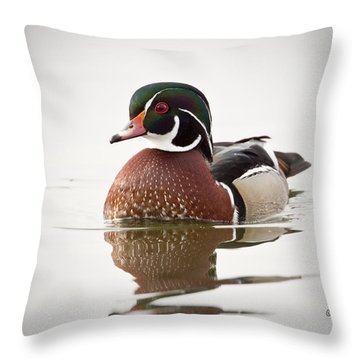 A Male Wood Duck Throw Pillow
