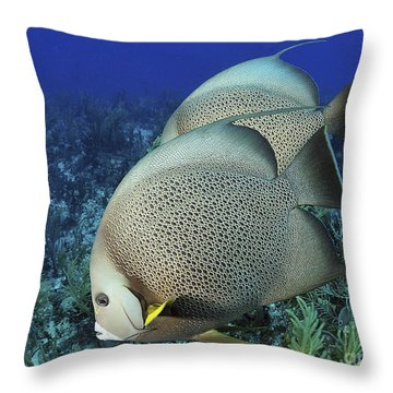 A Pair Of Gray Angelfish On A Caribbean Throw Pillow by Karen Doody