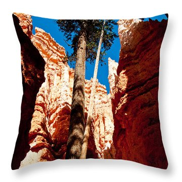 A Place To Grow Throw Pillow by Bob and Nancy Kendrick