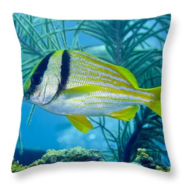 A Porkfish Swims By Sea Plumes Throw Pillow by Terry Moore