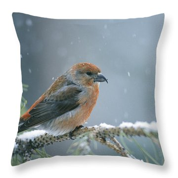 A Red Crossbill Loxia Curvirostra Throw Pillow