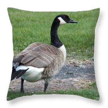 A Regal Goose Throw Pillow by Judy Via-Wolff