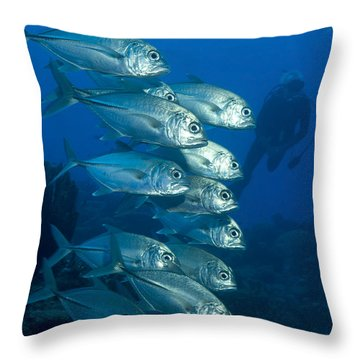 A School Of Bigeye Trevally, Papua New Throw Pillow by Steve Jones