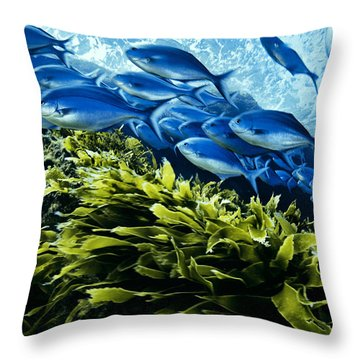 A School Of Blue Maomao Swim Throw Pillow by Brian J. Skerry