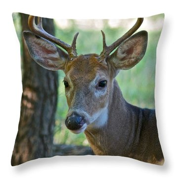 A Seven Point Profile 9752 Throw Pillow by Michael Peychich