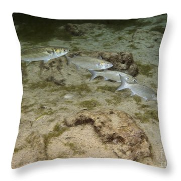 A Small School Of Grey Mullet Swim Throw Pillow by Terry Moore
