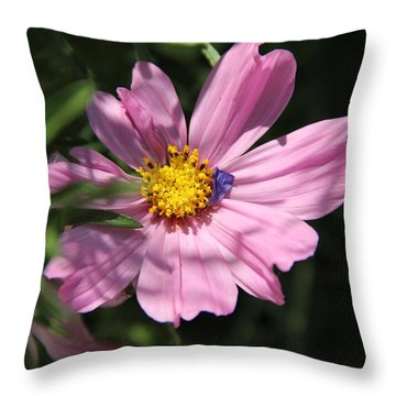 Throw Pillow featuring the photograph A Soft Landing by Elizabeth Sullivan