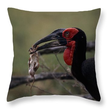 A Southern Ground Hornbill Prepares Throw Pillow