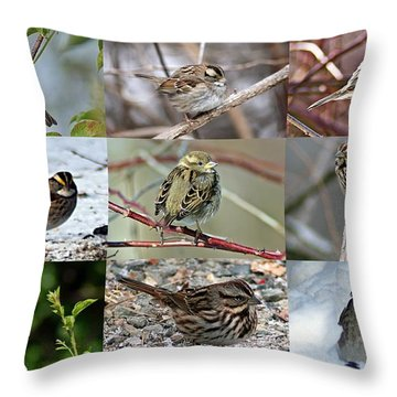 A Study In Sparrows Throw Pillow by Joe Faherty