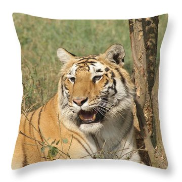 A Tiger Lying Casually But Fully Alert Throw Pillow by Ashish Agarwal
