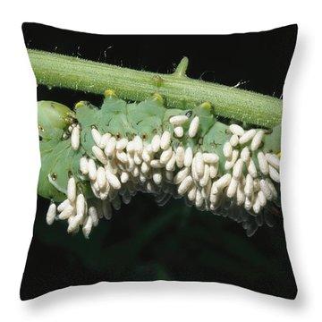 A Tobacco Hornworm Caterpillar Throw Pillow by Brian Gordon Green