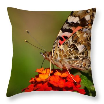 A Wing Of Beauty Throw Pillow