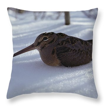 A Woodcock Sits In The Snow Throw Pillow