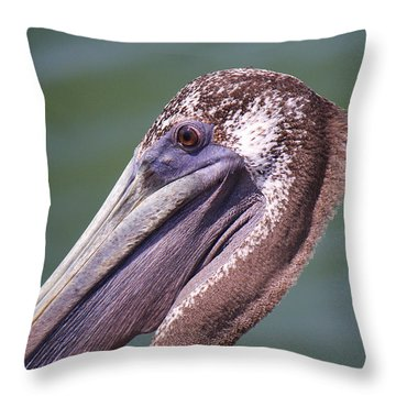 A Young Brown Pelican Throw Pillow by Roena King