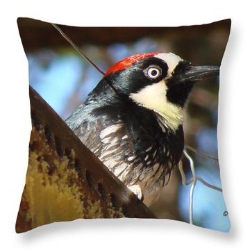 Throw Pillow featuring the photograph Acorn Woodpecker by Linda Cox