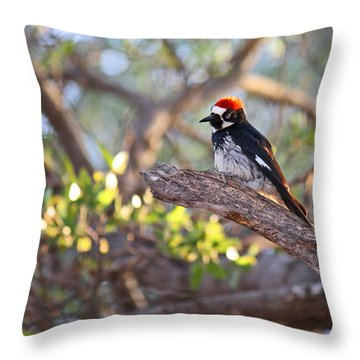 Acorn Woodpecker On A Branch Throw Pillow by Roena King