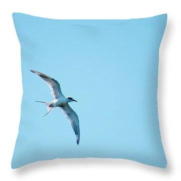 Adult Forster's Tern In Molt Throw Pillow by Roena King