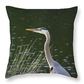 Throw Pillow featuring the photograph Adult Great Blue Heron by Brian Wright