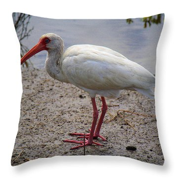 Adult White Ibis Throw Pillow by Roena King